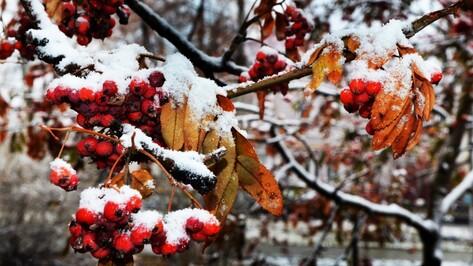 Фото РИА «Воронеж». Как снег накрыл Воронежскую область