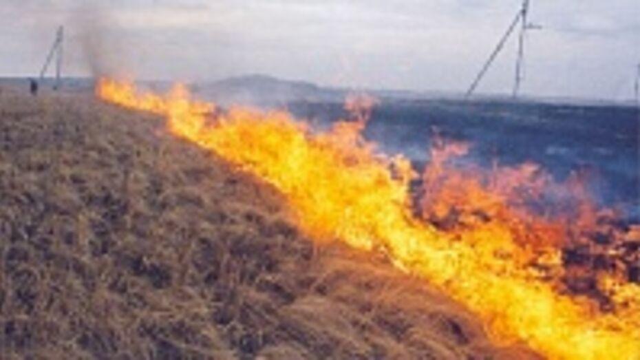 В Кантемировке из-за палов сухой травы произошло несколько серьезных возгораний