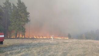 Возбудили дело о поджоге после пожара на 400 га в заповеднике в Воронежской области
