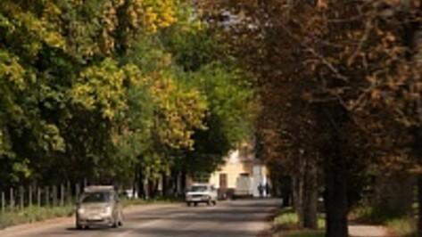Гордума Воронежа выделила 360 млн рублей на реконструкцию улицы Ломоносова