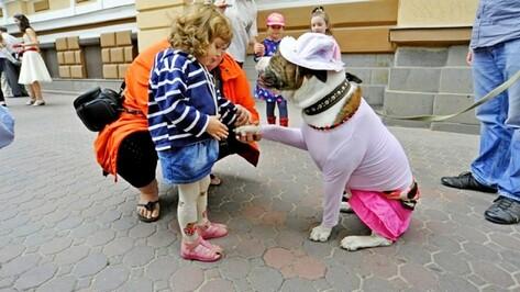 В Воронеже собаки продефилируют по подиуму в модных нарядах