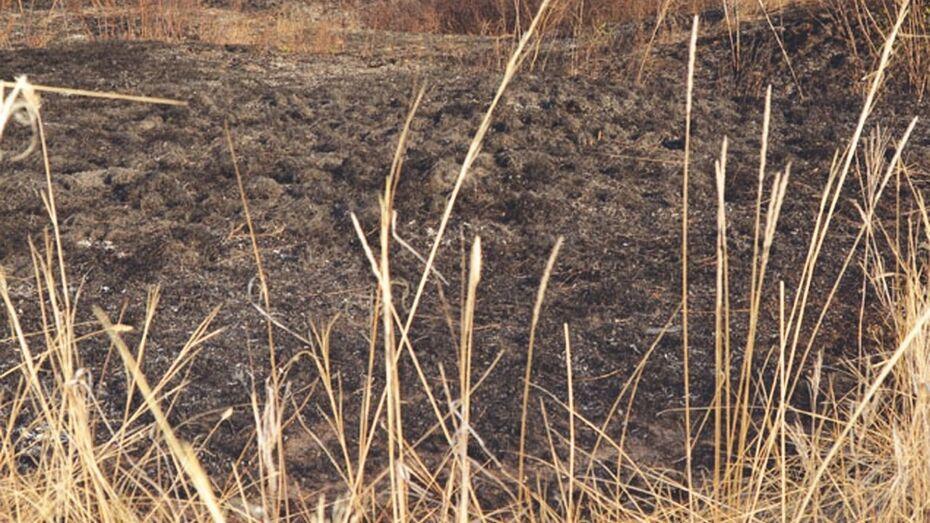 В Богучарском районе за выходные выгорело около гектара сухой травы