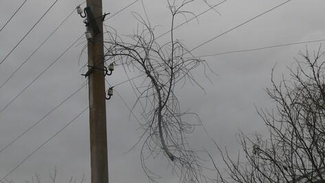 В Верхнемамонском районе из-за сильного ветра произошли порывы электросетей
