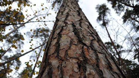 В Северном лесу Воронежа высадят почти 9 тыс деревьев
