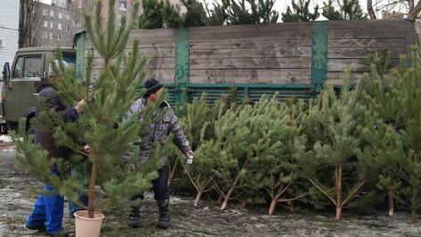 Выброшенные воронежцами новогодние елки переработают для благоустройства