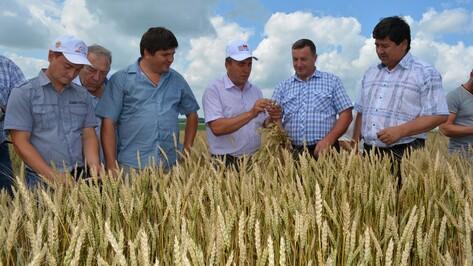 Нижнедевицкие аграрии  оценили виды на урожай