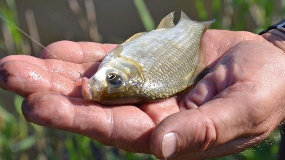 На бутурлиновском пруду прошли районные соревнования по рыбной ловле