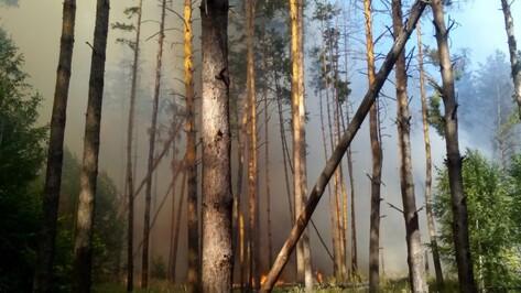 Очевидцы: под Воронежем загорелся лес