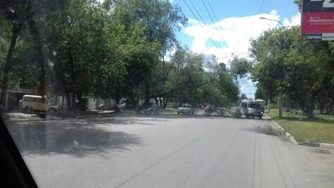 В Воронеже на улице Хользунова дерево упало на троллейбусные провода