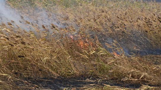 Еще один крупный природный пожар локализовали в Воронежской области