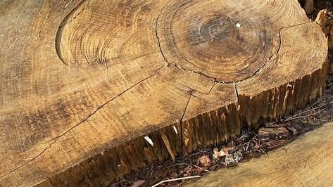 Житель Воронежской области незаконно вырубил ясени на 600 тыс рублей