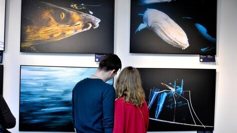 В Воронеже открылась масштабная выставка фотографий дикой природы