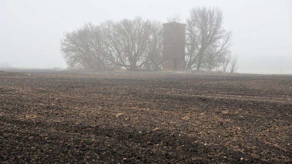 Желтый уровень опасности объявили в Воронежской области из-за тумана