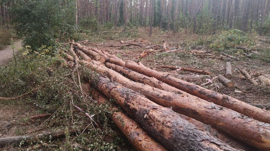 Департамент природных ресурсов и экологии объяснил вырубку в Северном лесу Воронежа