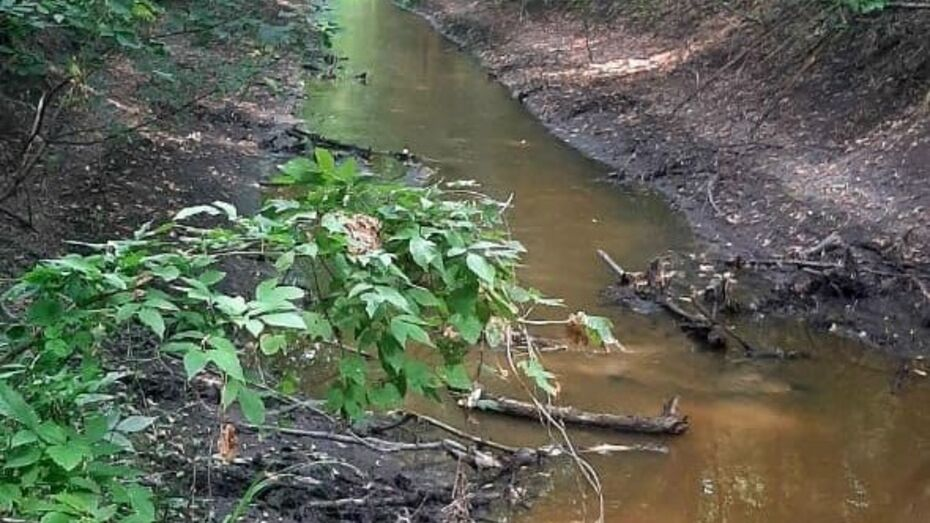 Департамент экологии начал проверку после загрязнения реки в Воронежской области