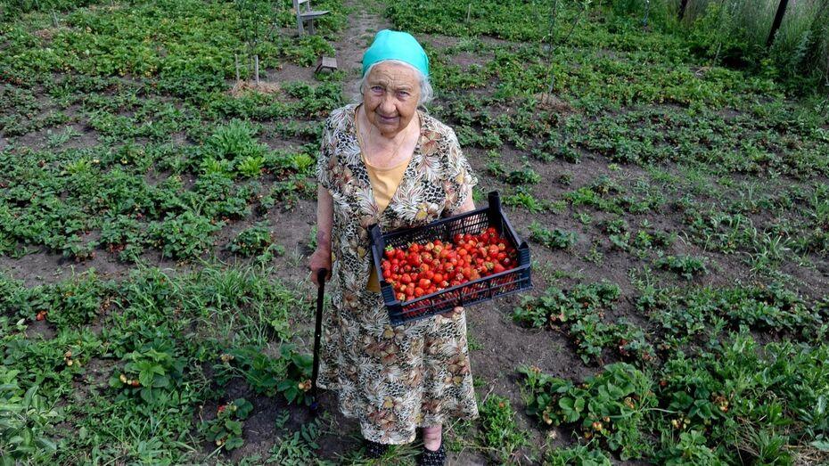 Бабушкина клубника. В Воронеже ищет преемника 85-летняя садовод