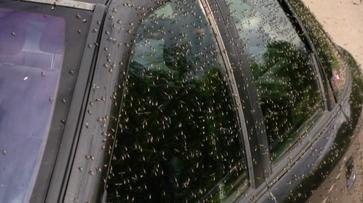 В Павловском районе Воронежской области проведут допобработки против комаров