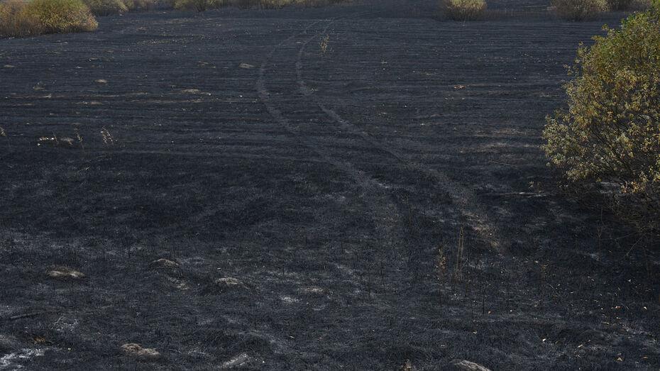 Минобороны опровергло обвинения в вероятном поджоге воронежского заповедника