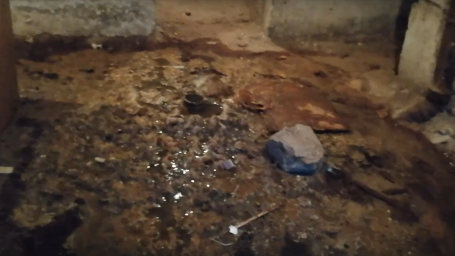 Подвал дома на левом берегу Воронежа затопило фекалиями
