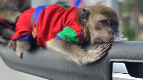 В Воронеже нашли пропавшую обезьяну