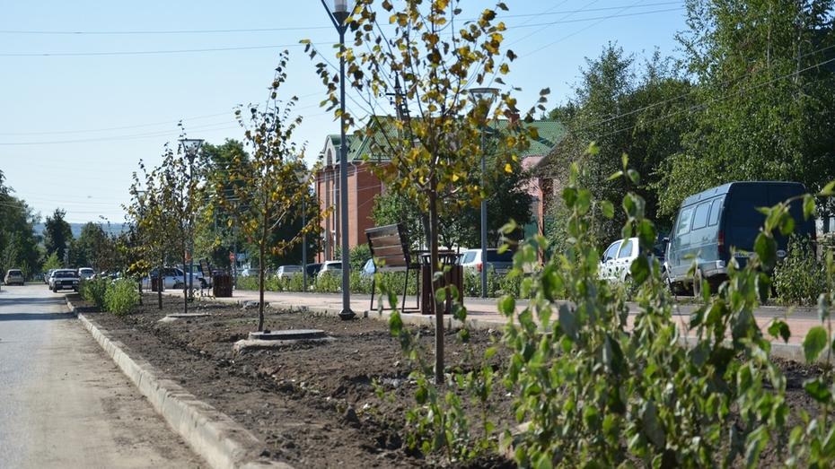 В Острогожске неизвестные украли с центральной улицы 124 куста дерена белого