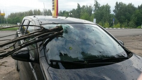 Воронежец добился компенсации за разбитую веткой иномарку