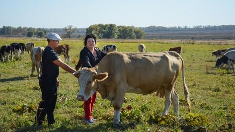 В Острогожском районе хозяева личных подворий сменили свиней на коров