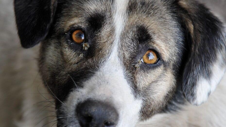 Воронежские экологи подключились к поискам убийц бездомной собаки в Тепличном