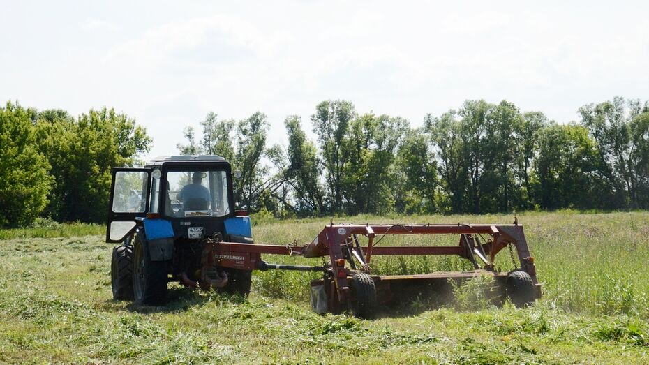 Острогожские аграрии заготовили первую тысячу тонн сена
