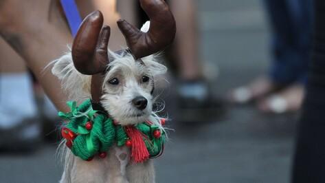 Главными звездами парада на Дне Воронежа стали собаки в костюмах
