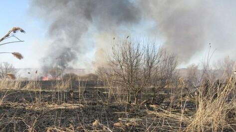 Россошанский район очистят от камыша в марте