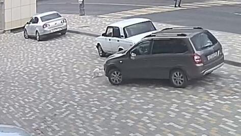 Полиция проведет проверку после заявления правозащитницы об «убийстве» кота в Воронеже