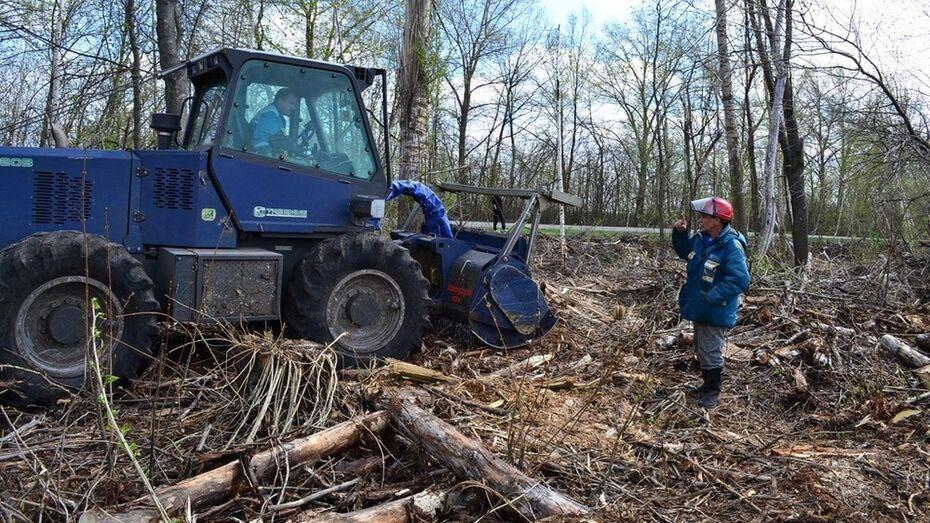 В Грибановском районе свалку деревьев уберут после критики губернатора