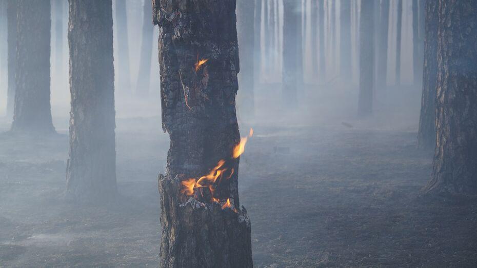 В лесу под Борисоглебском загорелась сухая трава