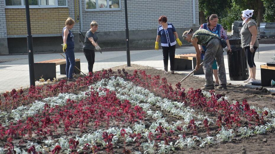 В Поворино к юбилею поселения высадили 6,3 тыс цветов