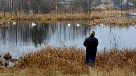 Жители поселка под Воронежем попросили спасти семью лебедей