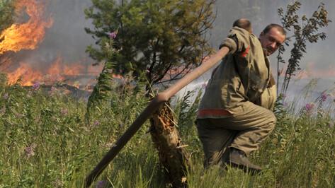 Становится жарко. Могут ли в Воронежской области повториться лесные пожары 2010-го?