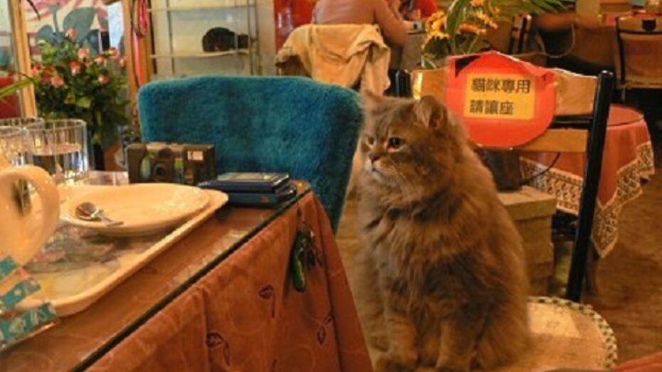 Воронежцев приглашают в кафе с кошками