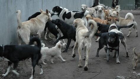Воронежцы собирают подписи в защиту бездомных собак