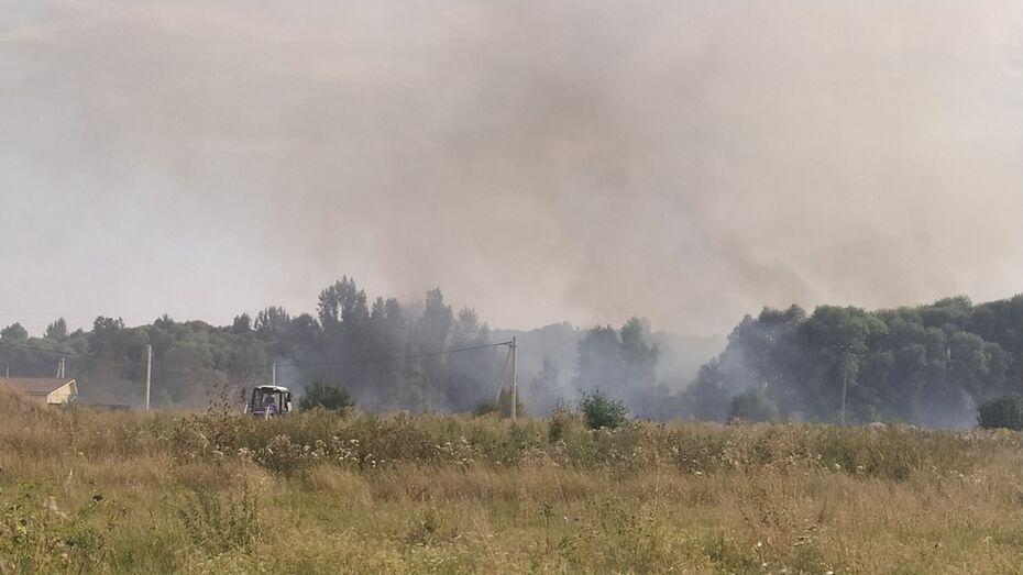 Под Воронежем пожарные 7 часов тушили траву и камыш