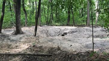 «Лунный ландшафт». Раскопки в воронежской Нагорной дубраве поссорили экологов и археологов