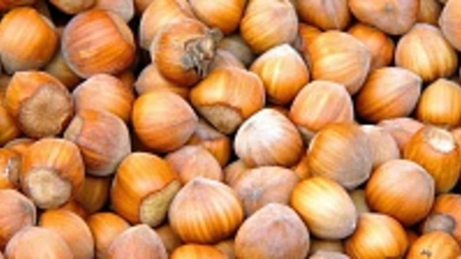 В нижнедевицких лесах отмечен  небывалый урожай орехов
