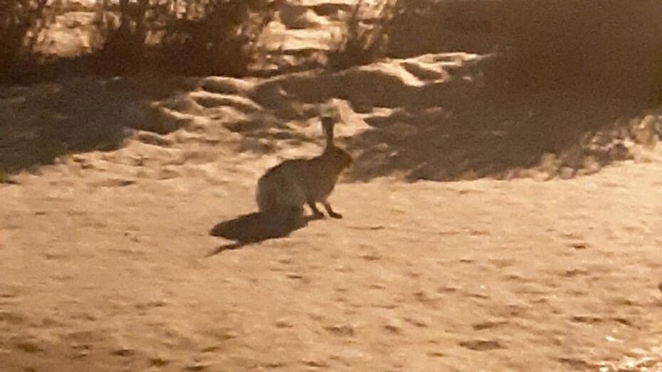 Зайчиха с зайчатами поселилась на территории воронежского детсада