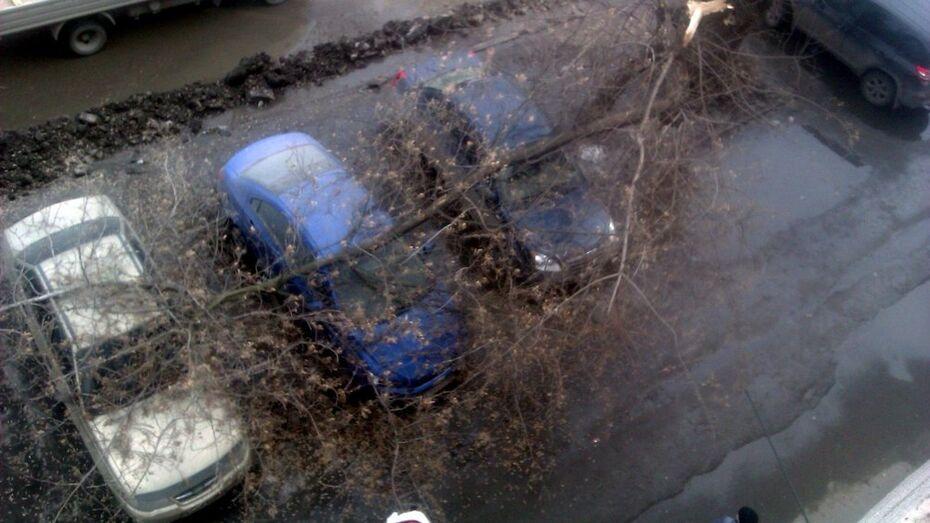 В Воронеже упавшая ветка повредила три иномарки