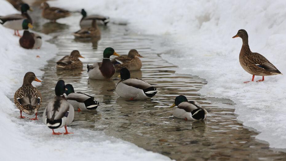 Воронежцев попросили покормить птиц зимой