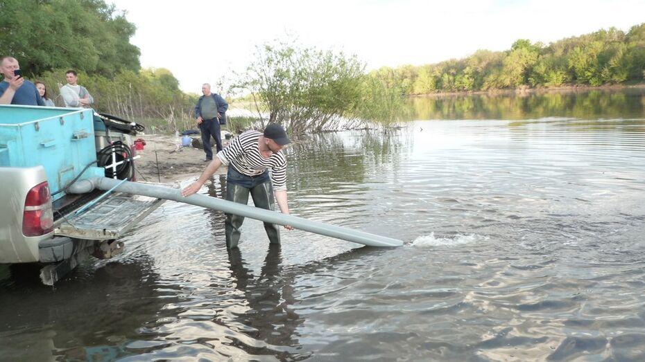 Около 1 млн малька стерляди выпустят в Дон в Лискинском районе