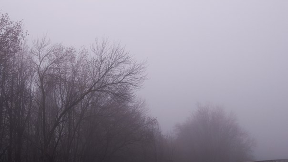 Туман провисит над Воронежем минимум до вторника