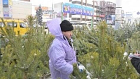 Воронежцы смогут купить новогодние елки с 19 декабря