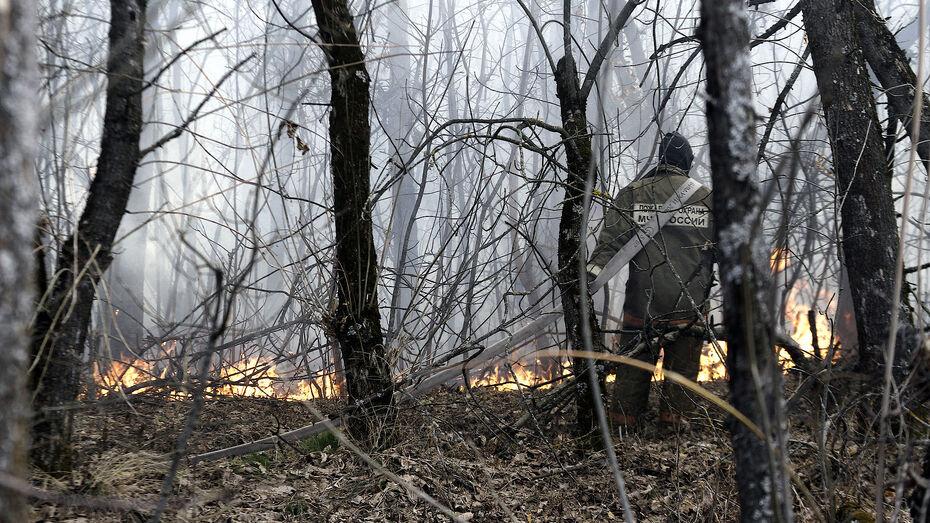 В лесах Воронежской области зафиксировали еще 2 пожара