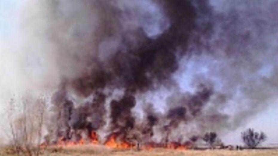 В Воронежской области участились ландшафтные пожары